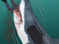 Shark of War cover
